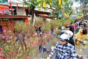 Rực rỡ sắc xuân chợ hoa Hàng Lược mỗi năm chỉ họp duy nhất một lần ở Thủ đô