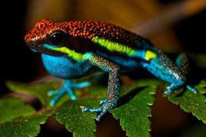 Top 10 loài động vật có thể giết người hàng loạt bằng nọc độc