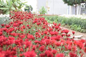 Làng hoa trăm tuổi điểm sắc màu cuộc sống người dân Hạ Lũng