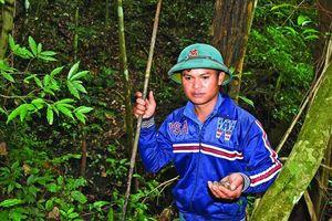 Truy tìm ốc đại bổ giữa rừng sâu