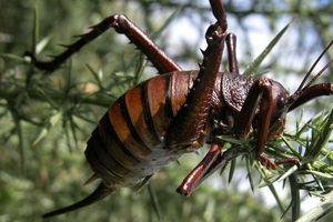 Hết hồn những côn trùng đã xấu còn to hết phần thiên hạ
