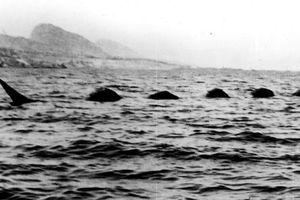 Phát hiện 'quái vật hồ' huyền thoại dài hơn 18m nổi lên mặt nước