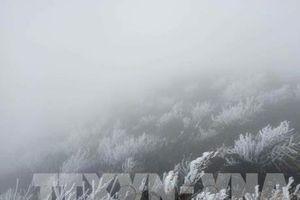 Dự báo thời tiết ngày mai (mùng 5 Tết): Bắc Bộ rét đậm