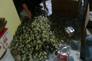 Ninh Bình: 28 người bị bắt do tàng trữ, đốt pháo đêm giao thừa