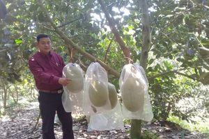Thu tiền tỷ từ sầu riêng nghịch vụ và các loại trái cây đặc sản