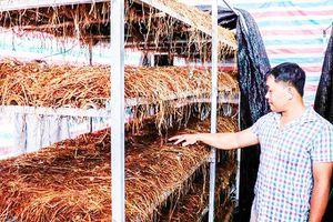 Hỗ trợ nông dân phát triển kinh tế