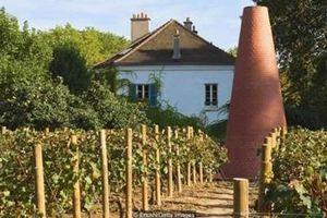 Khám phá những vườn nho rượu ẩn khuất ở Paris