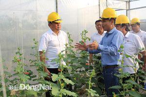 Sức bật từ nông nghiệp công nghệ cao