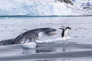 Những bức ảnh ấn tượng về động vật hoang dã