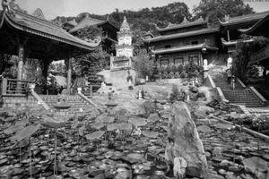 Giàu ý nghĩa giai thoại về đôi mãng xà chùa Hang nổi tiếng