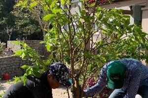 Vườn Quốc gia Côn Đảo: Phát động trồng cây và tôn tạo cảnh quan môi trường