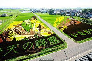 Những cánh đồng lúa đặc biệt tại Nhật Bản