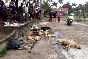 Nghệ An: Bắt quả tang 2 đối tượng trộm hơn 20 con chó, mèo