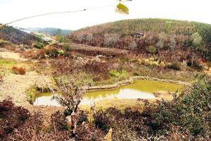 800 hộ dân ở Lâm Đồng bị thiệt hại vì sương muối