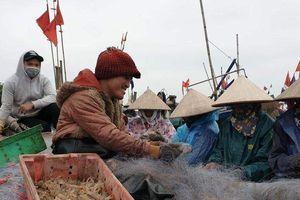 Ngư dân Nam Định liên tục trúng lớn sau những chuyến ra khơi đầu năm