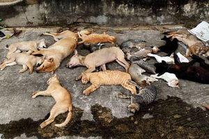 Bắt 2 anh em ruột bỏ bả, bắt trộm hàng chục con chó, mèo