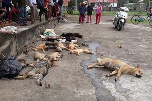 Bắt giữ 2 anh em đi đánh bả, trộm hàng loạt chó mèo