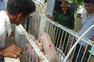 Sagrifood cung cấp giải pháp chăn nuôi an toàn