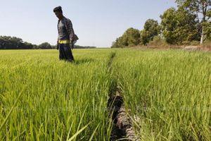 Thái Lan sợ Việt Nam chiếm mất ngôi xuất khẩu gạo