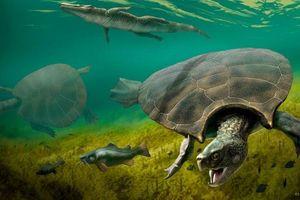 Tìm thấy hóa thạch của rùa khổng lồ ăn thịt rắn ở Nam Mỹ