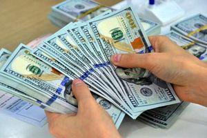 Thợ sơn trộm hơn 1 tỷ của chủ căn hộ cao cấp