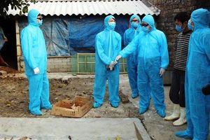 Tập trung dập dịch cúm gia cầm
