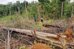 Anh dẫn đầu nỗ lực chống phá rừng