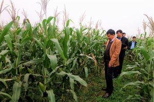 Hồng Hà Sơn La (HSL) góp thêm vốn 15 tỷ đồng vào Cường Sinh Yên Châu