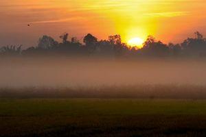 'Bức tranh quê' thanh bình giữa màn sương sớm tháng 2