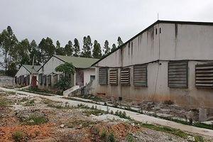 Lập Thạch (Vĩnh Phúc): Nhiều năm sống chung với trại lợn ô nhiễm
