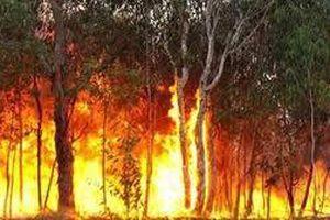 Nguy cơ cháy rừng ở Cà Mau và Bạc Liêu