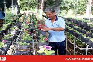Châu Đốc đẩy mạnh ứng dụng công nghệ cao vào sản xuất nông nghiệp