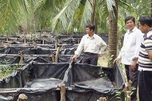 Khởi nghiệp nông nghiệp: Thu 200 triệu mỗi năm từ nuôi lươn dưới tán dừa