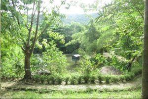 'Đắm mình' trong vườn tre Sơn Trà Tịnh Viên