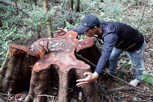 Rút súng gí vào đầu cán bộ đi kiểm tra rừng khi bị kiểm soát gỗ