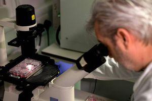 Mỹ công bố mô hình phân tử 3D đầu tiên về virus COVID-19