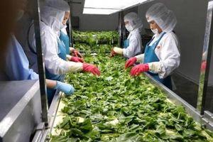 Doanh nghiệp đổ vốn lớn nhưng vì sao chế biến nông sản vẫn 'hụt hơi'?