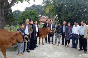 Quỹ Vì trẻ em khuyết tật Việt Nam trao tiền hỗ trợ mua bò sinh sản cho hộ nghèo