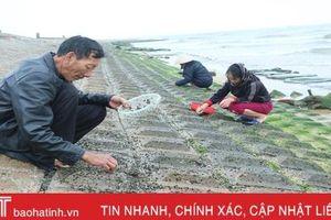 Theo chân người dân làng chài Cẩm Nhượng cào rong biển kiếm tiền triệu mỗi ngày