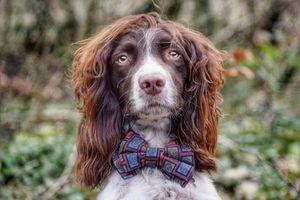 Chú chó với bộ lông 'lãng tử' là ngôi sao nổi tiếng trên mạng xã hội