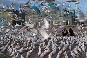 Hàng nghìn bồ câu trắng bay quanh nhà thờ Hồi giáo
