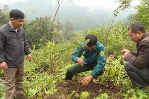 Hà Giang: Bắc Mê - Điểm sáng trồng rừng