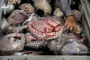 Trung Quốc muốn cấm hoàn toàn buôn bán động vật hoang dã