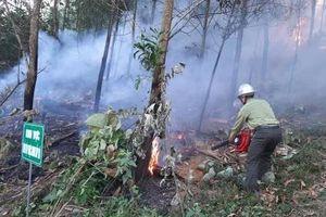 Phòng cháy, chữa cháy rừng - Bài 1: Vai trò quan trọng của chủ rừng