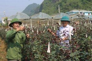 Vai trò hợp tác xã trong xây dựng nông thôn mới
