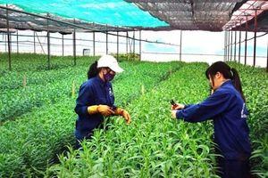 31% doanh nghiệp nông nghiệp than 'phiền hà' về thủ tục hành chính đất đai