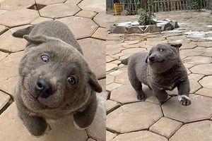 Những chú chó nổi tiếng trên mạng nhờ biểu cảm gương mặt 'khó đỡ'