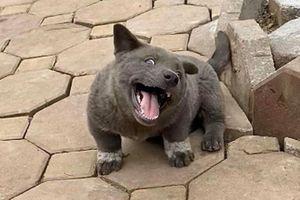 Chú chó tên Dúi nổi tiếng mạng xã hội bởi biểu cảm ngộ nghĩnh
