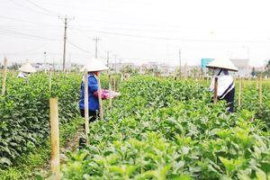 Phát triển nông nghiệp quy mô lớn: Doanh nghiệp khó tiếp cận đất đai