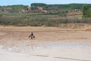 Kon Tum: Hạn hán khiến cây khô, 'người héo'